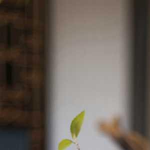 華墨國際設計——五礦·萬境藍山(長沙)洋房Y2樣板房