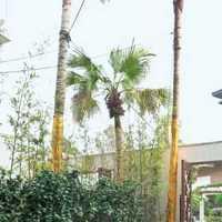 上海别墅装修风格今年流行什么